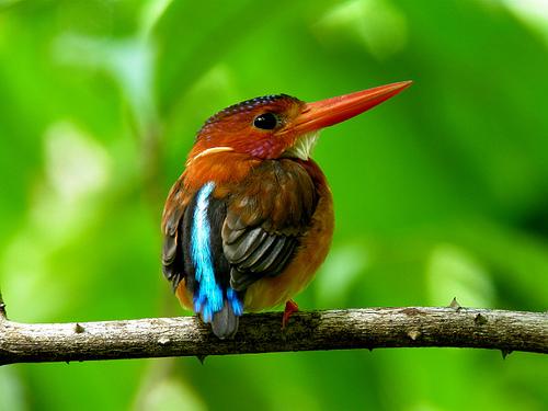 Birding in LLNP