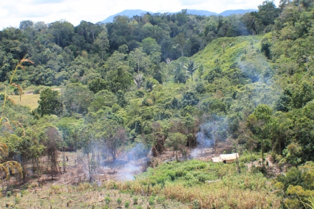 Encroachment and Illegal Logging