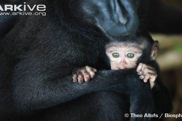 Slide-Macaque