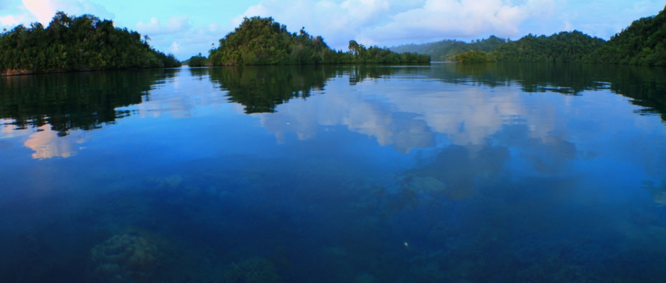 Togean Reef and Forest