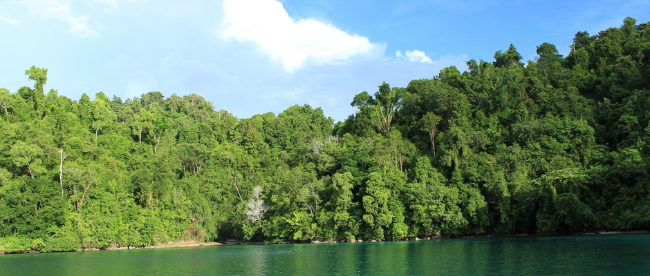 Rainforest in Togean Islands