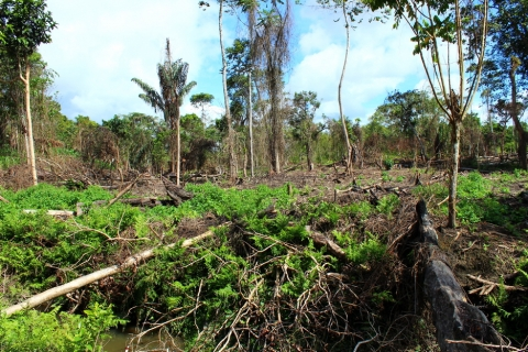 Moral Sense in Conservation